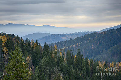 Green And Gold Forest Print by Idaho Scenic Images Linda Lantzy