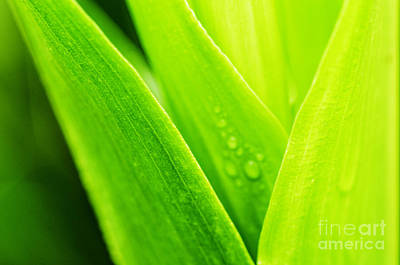 Simple Beauty In Colors Photograph - Green And Wet by Thomas R Fletcher