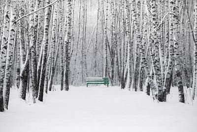 Snowstorm Photograph - Green Bench by Alexander Senin