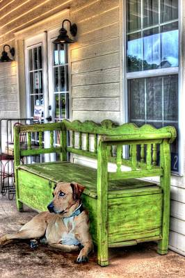 Catahoula Photograph - Green Bench And Catahoula Dog by Delilah Downs