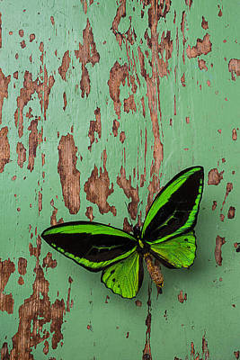 Butterfly Photograph - Green Butterfly On Old Green Wall by Garry Gay