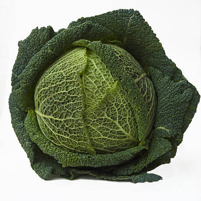 Green Cabbage Print by Bernard Jaubert