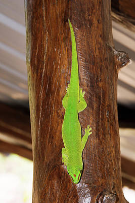 Green Day Gecko Print by Dr P. Marazzi