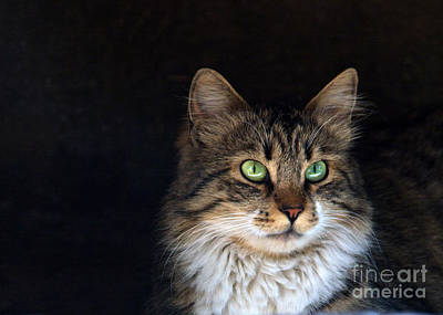 Two Faces Photograph - Green Eyes by Stelios Kleanthous