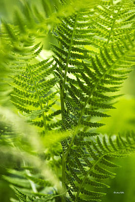 Green Fern Art Print by Christina Rollo