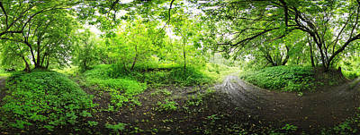 Quebec Photograph - Green Forest by Panoramic Images
