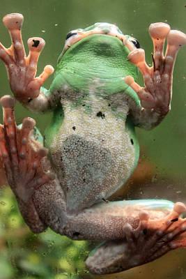 Green Frog Original by Munir Alawi