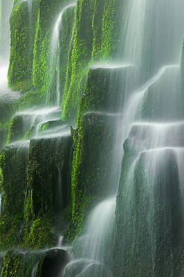 Fall Photograph - Green Glory by Chris Moore