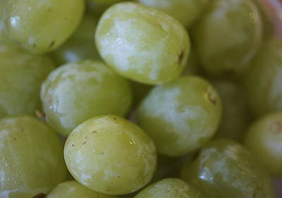 Bunch Of Grapes Photograph - Green Grapes by Laurie Perry