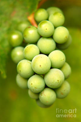 Grapes Photograph - Green Grapes by Michal Bednarek