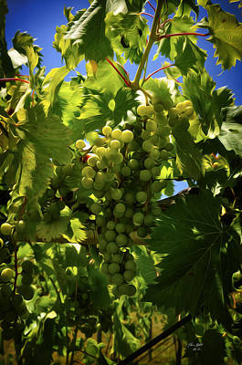 Grapes Painting - Green Grapes On The Vine by Tom Bell