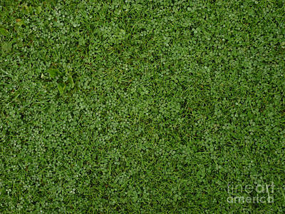 Spring Photograph - Green Grass With Clover by Kerstin Ivarsson