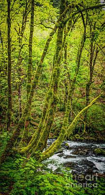 Green Green Print by Jon Burch Photography