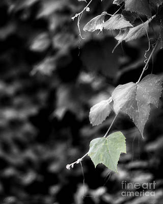 Faith Hope And Love Photograph - Green Leaf Color Of Hope by Ella Kaye Dickey