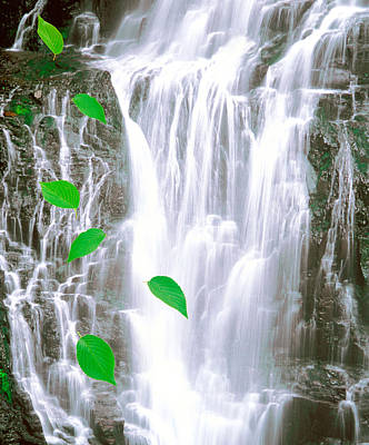 Green Leaves Cascading In Front Print by Panoramic Images