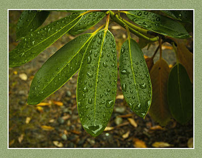 Green Leaves Print by Ron Roberts