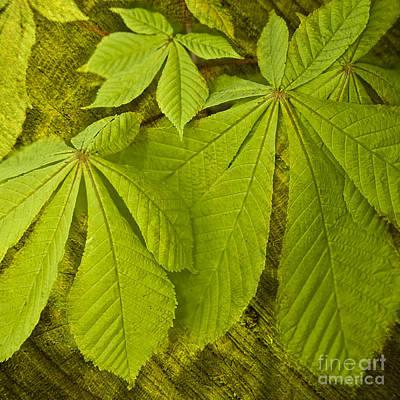 Green Leaves Series Print by Heiko Koehrer-Wagner