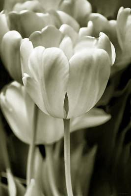 Olive Green Luminous Tulip Flowers Print by Jennie Marie Schell