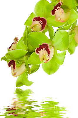 Green Orchid Print by Boon Mee