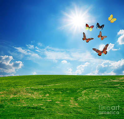 Field Photograph - Green Perfect Field A Butterfly Group Flying by Michal Bednarek
