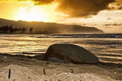 Haleiwa Photograph - Green Sea Turtle At Sunset V2 by Douglas Barnard