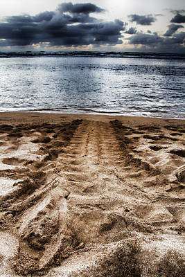Haleiwa Photograph - Green Sea Turtle Track by Douglas Barnard