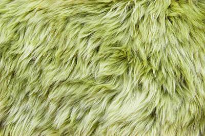Lime Green Photograph - Green Sheepskin by Tom Gowanlock