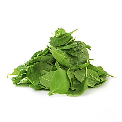 Spinach Photograph - Green Spinach by Elena Elisseeva