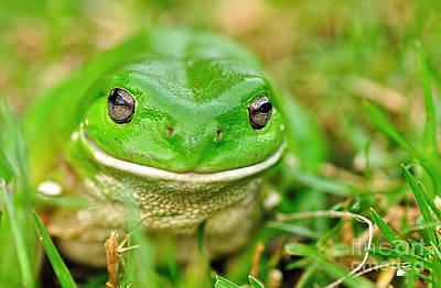 Green Tree Frog Original by Kaye Menner