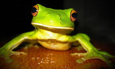Green Tree Frog Print by Laura Hiesinger
