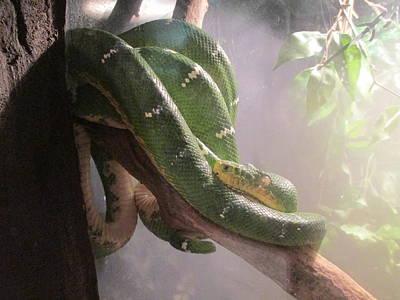 Green Tree Python Original by Elaine Haakenson