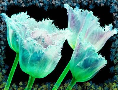 Tulips Photograph - Green Tulip Glow by Debra  Miller
