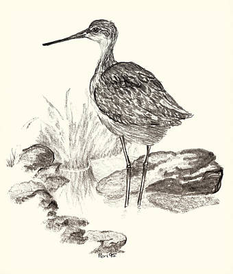 Impression Drawing - Greenshank by Mountain Dreams