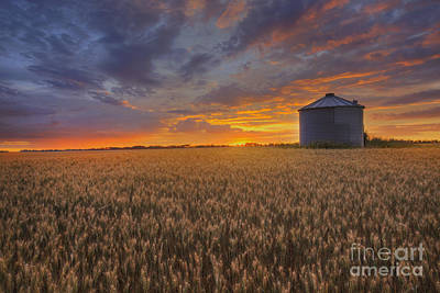 Alberta Photograph - Greeting The Sun by Dan Jurak