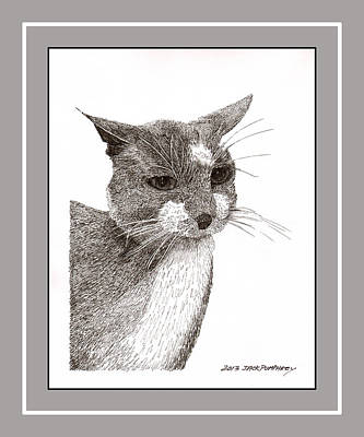 Grey Cat Number 12 Print by Jack Pumphrey
