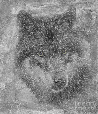 Wolf Photograph - Grey Wolf by Jim  Hatch