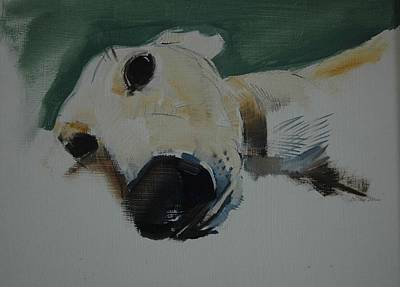 Domestic Animals Photograph - Greyhound, 2009 Oil On Paper by Sally Muir