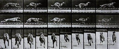 Greyhound Running Print by Eadweard Muybridge