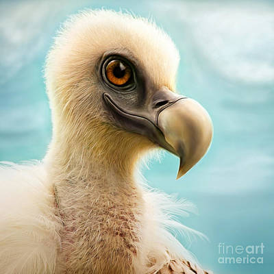 Vulture Mixed Media - Griffi by Silvio Schoisswohl