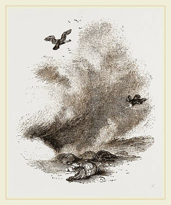 Vulture Drawing - Griffon Vultures by Litz Collection