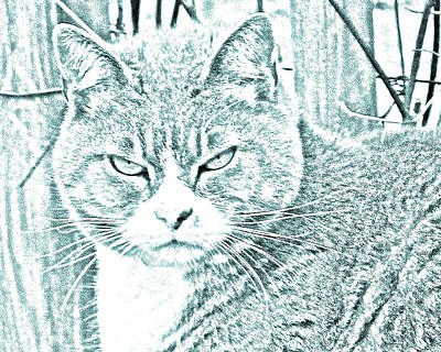 E Photograph - Grouchy Kitty by J D Owen