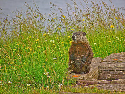 Groundhog Digital Art - Groundhog At Point Amour In Labrador by Ruth Hager
