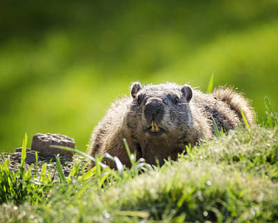 Groundhog Photograph - Groundhog Day by Vicki Jauron