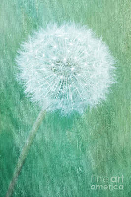 Dandelion Mixed Media - Groundsel by Angela Doelling AD DESIGN Photo and PhotoArt