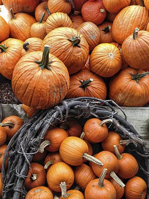 Cornucopia Photograph - Group Of Farm Fresh Delicious Pumpkins by Andy Gimino