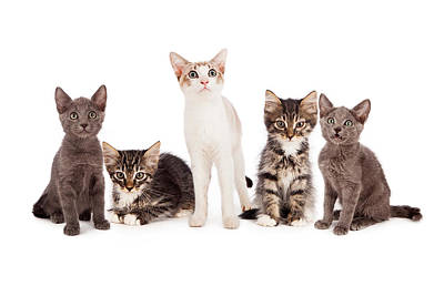 Group Of Five Young Kittens Print by Susan  Schmitz