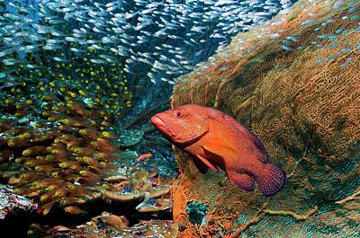 Anthozoa Photograph - Grouper And Sweepers On A Reef by Georgette Douwma