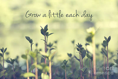 Typography Photograph - Grow A Little Each Day Inspirational Green Shoots And Leaves by Beverly Claire Kaiya