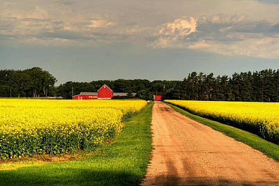 Growing For Gold Print by Larry Trupp