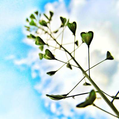 Weed Line Photograph - Growing Love by Marianna Mills